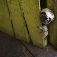 William Grubb's avatar